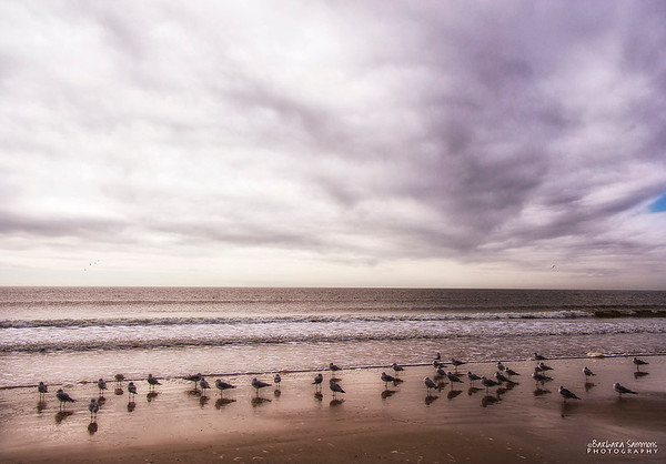 Shorebirds on Yaupon Beach - Oak Island, NC