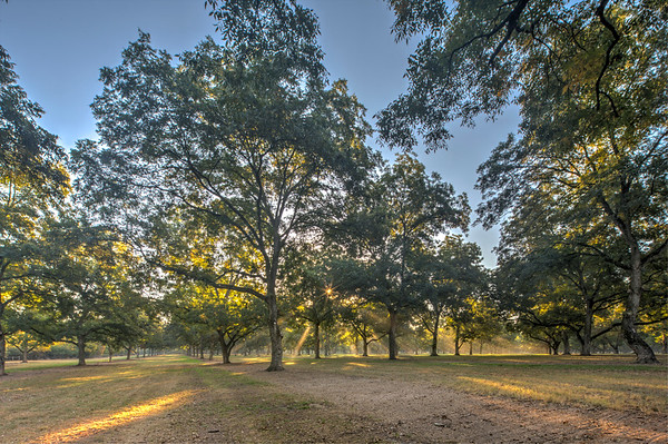 Pearson Pecan Orchard