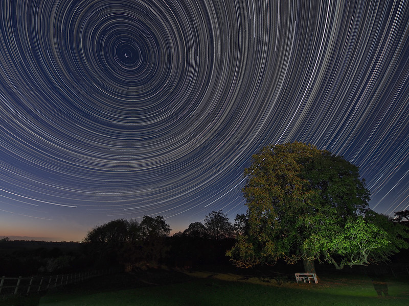 Blossom tree star trail
