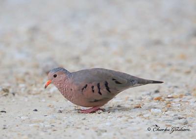 Saint Andrews Park, Panama City Beach Wildlife