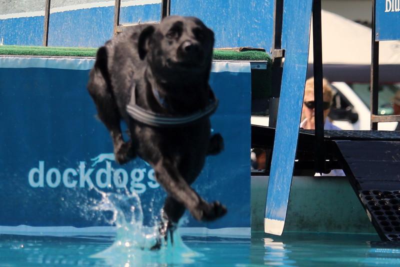 Dock Dogs at Fair-127.JPG