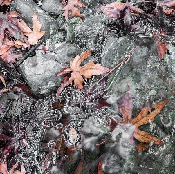 Autumn's Stream