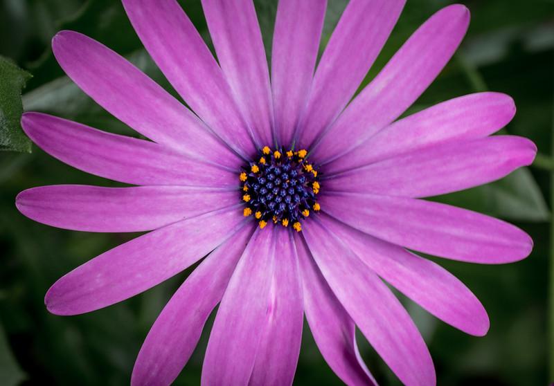 Flora_preview-2.jpg