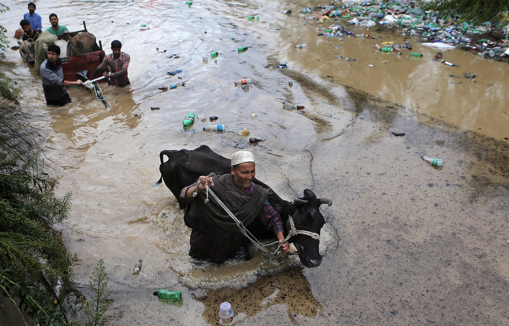 . Kashmiri men move with their cattle towards safer area in Srinagar, India, Saturday, Sept. 6, 2014. Heavy monsoon rains have caused flash floods and landslides.   (AP Photo/Dar Yasin)