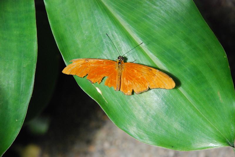 Denver Butterfly Pavilion 2432819532.jpg
