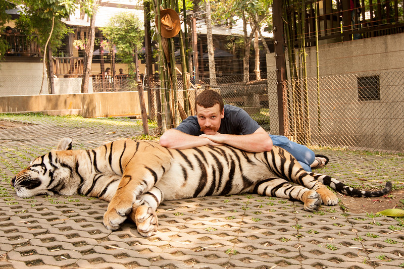 John loafing behind a absolutely massive, fully grown male tiger.