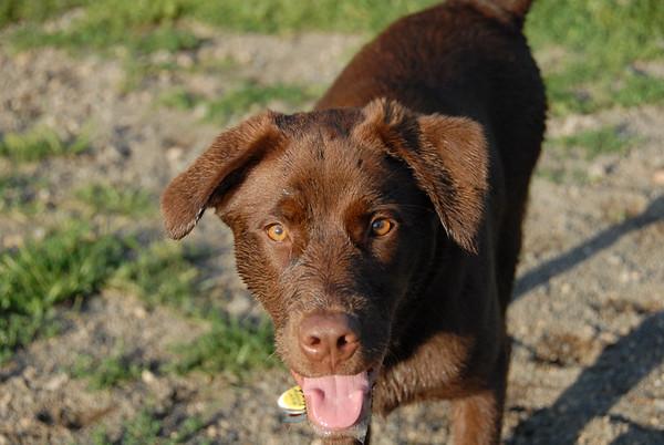 2010-07-10 Denville Dog Park
