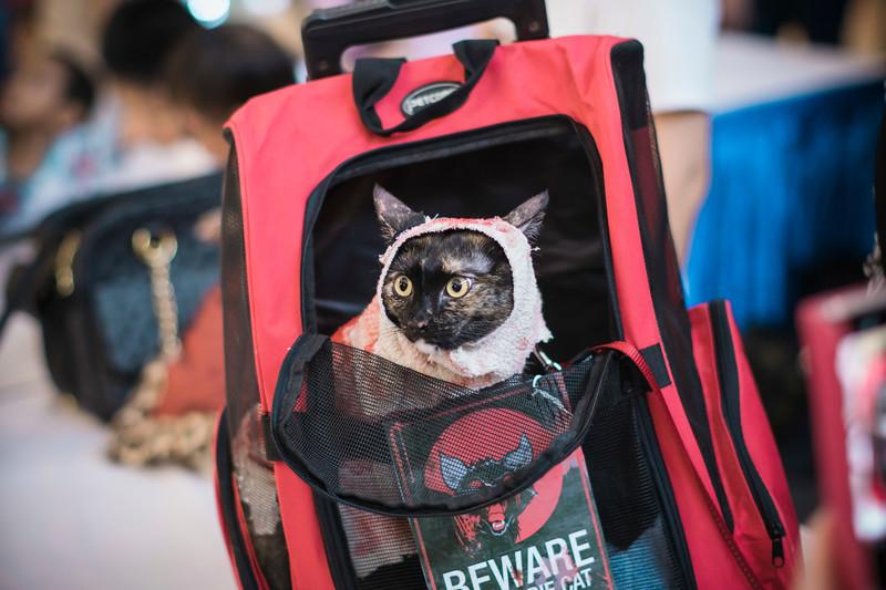 VividSnaps-The-Seletar-Mall-CAT-Dress-Up-Contest-092.jpg