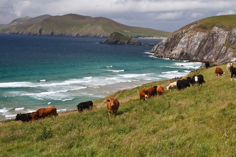 Ireland_070211_170.jpg