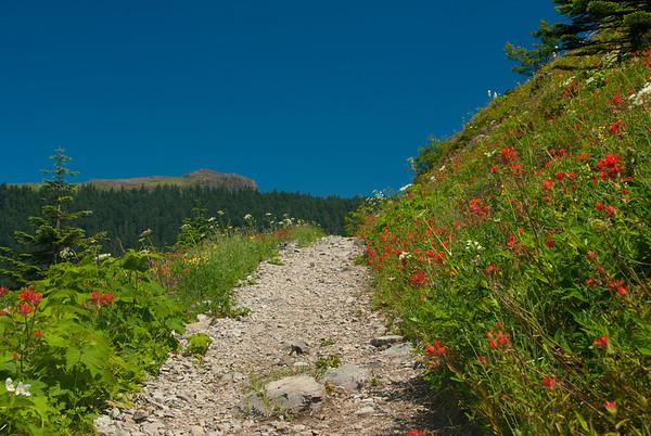 Sliver Star Wildflowers