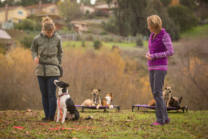Dog Photos-Edited-72.jpg
