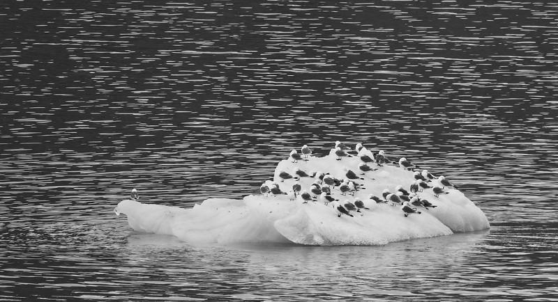 scenic cruising Liefdefd fjord, Polar icecap copy5.jpg