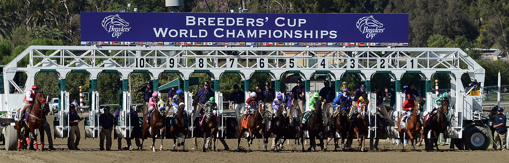 ". The start of the fourth race during the Breeders\' Cup at Santa Anita Park in Arcadia, Calif., on Saturday, Nov. 2, 2013. Jockey Javier Castellano atop ""Ria Antonia\"" won the race.    (Keith Birmingham Pasadena Star-News)"