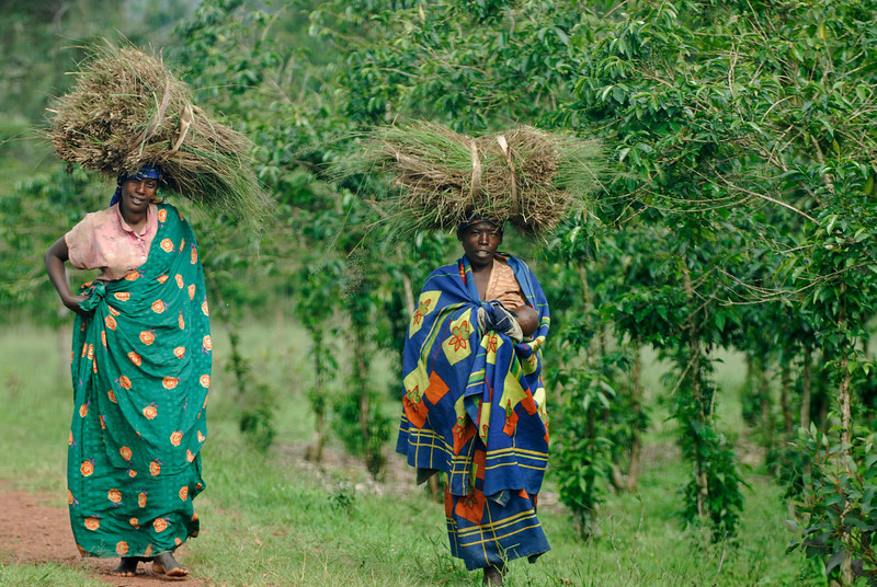 070116 4556 Burundi - on the road to Source of the Nile _E _L ~E ~L.JPG
