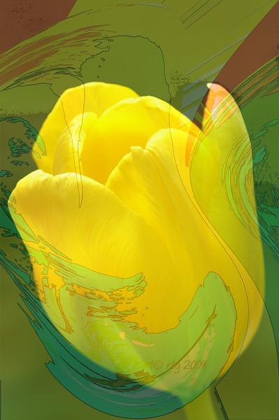 FlowerArt_Tulip_Yellow_0578.jpg