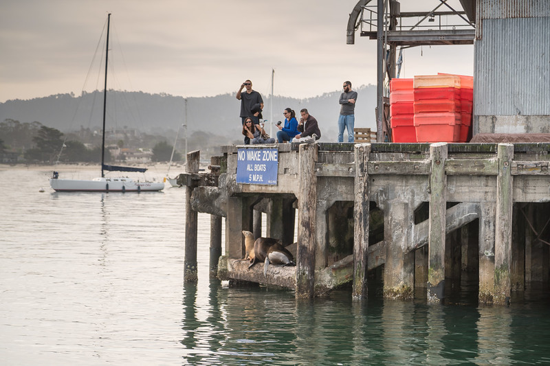 Whale Watching at Monterey-6.jpg