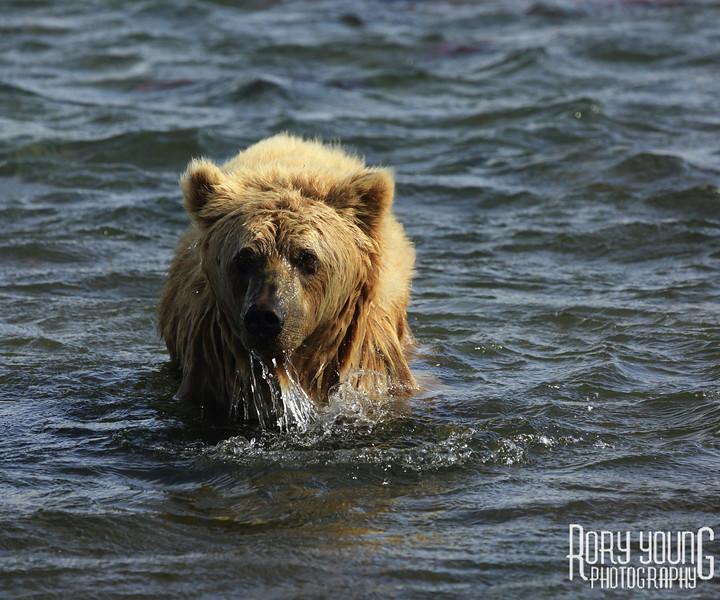 Alaska0106.jpg