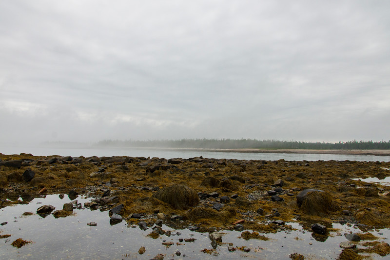 Foggy-beach2.jpg