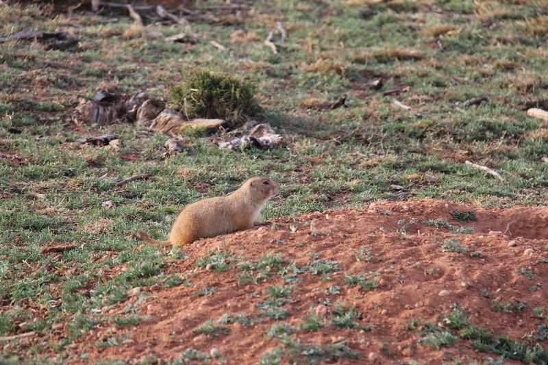 20171120-006 - Texas - Caprock Canyons SP - Prarie Dog Town.JPG