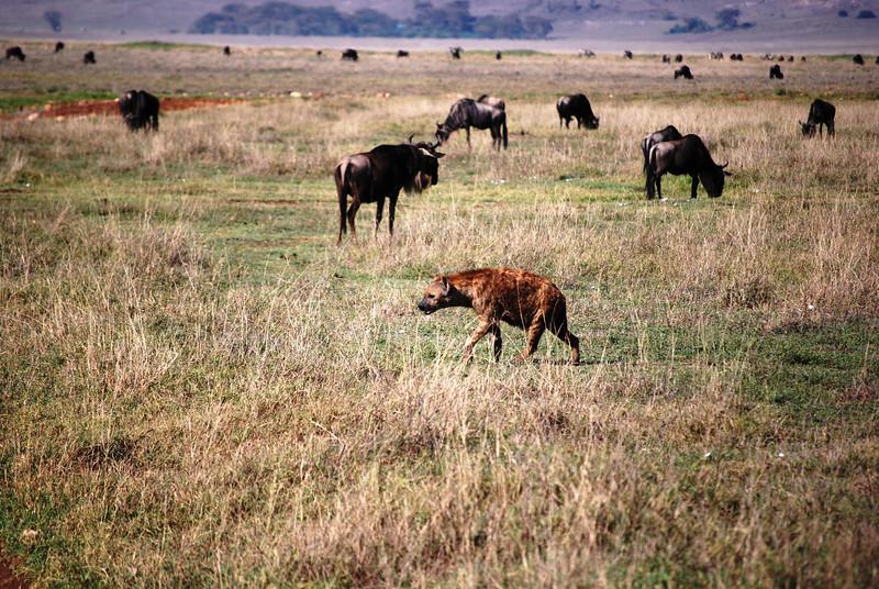 Ngorongoro (38).JPG