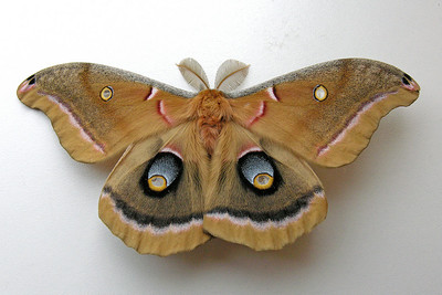 Moths Seen at Other Locations