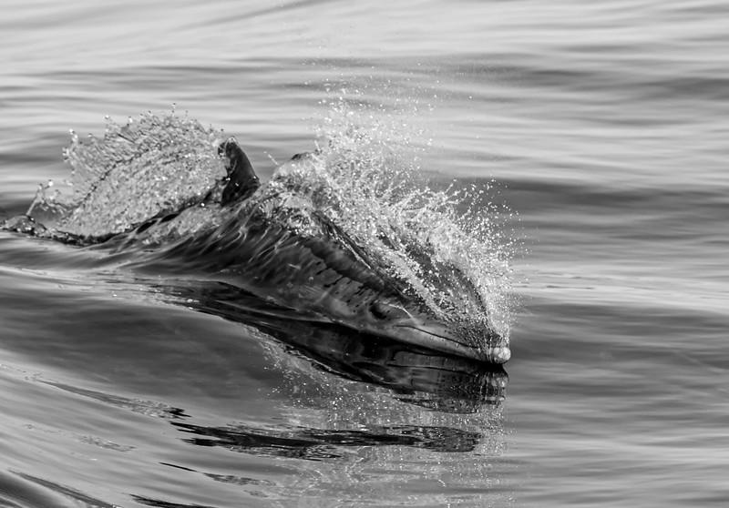 Dolphin-25.jpg