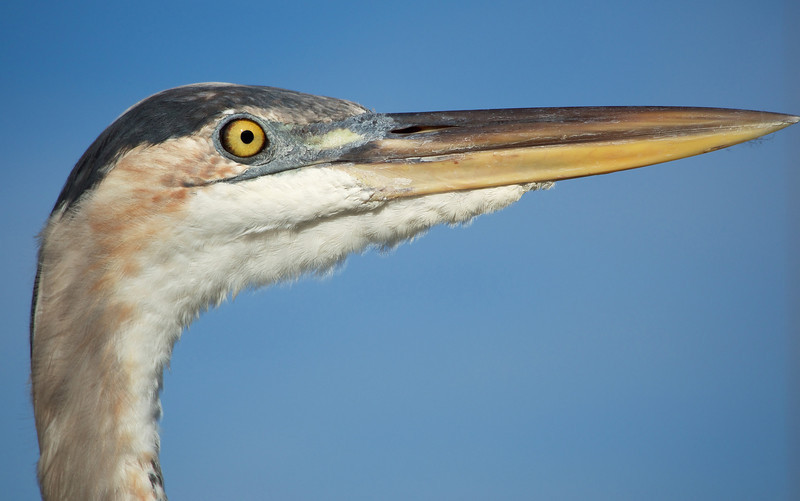 Close up of the Heron. Captured with the Olympus OM-D & 75-300mm