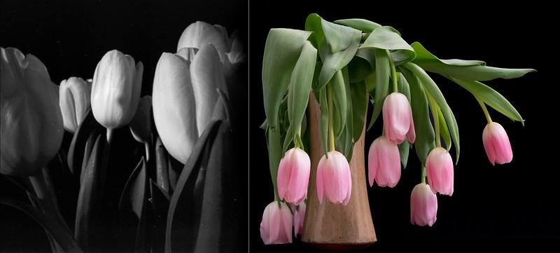 tulipsall.jpg