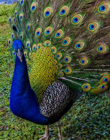 Birds of Gatorland