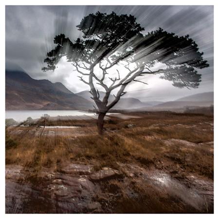 Lone pine tree.jpg