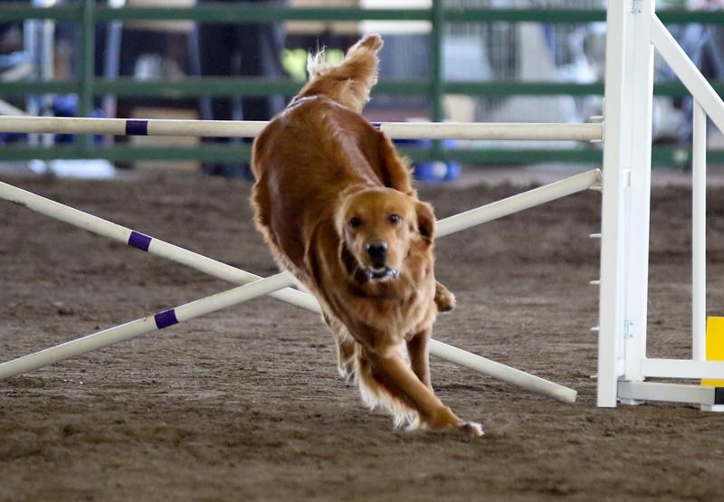 3-15-2015 Bloodhound-0612.jpg
