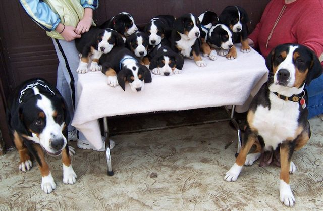 The WHOLE family!  Brewster is fourth from the right.