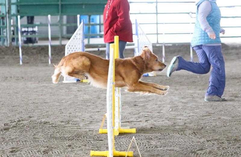 3-10-2019 Bloodhound-0982.jpg