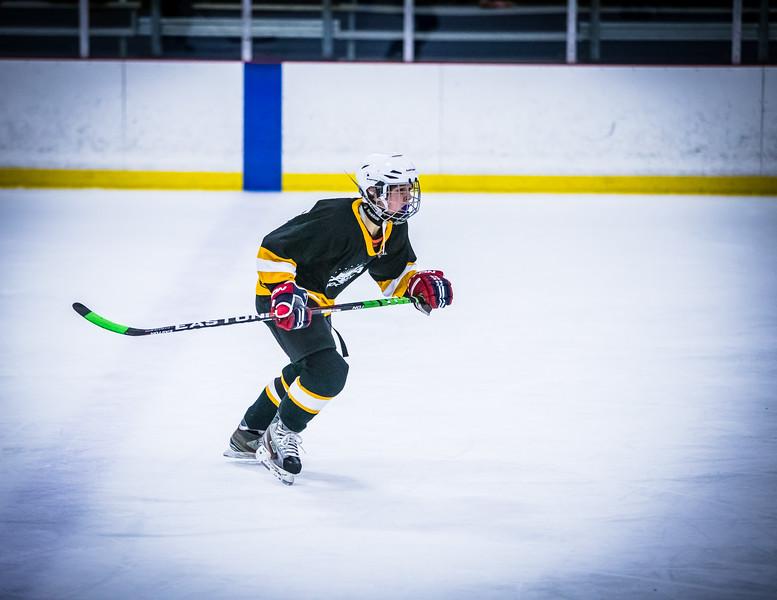 Bruins2-427.jpg