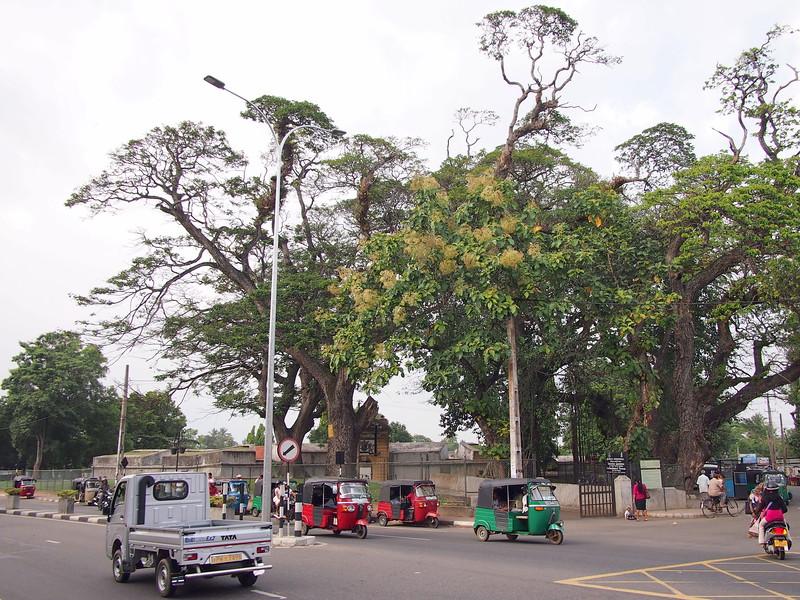 P2178660-star-fort-trees.JPG