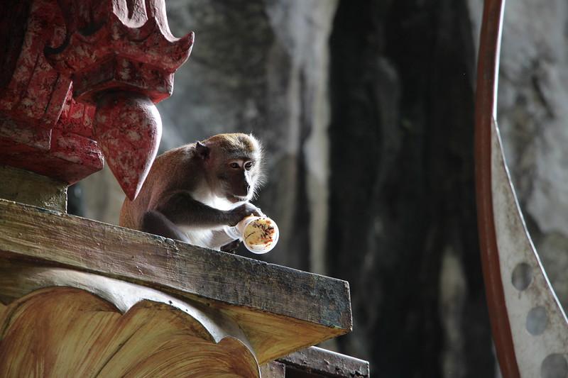 Batu_monkey