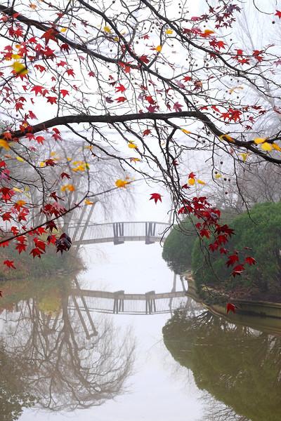 Japanese maple at the Van Gogh Bridge