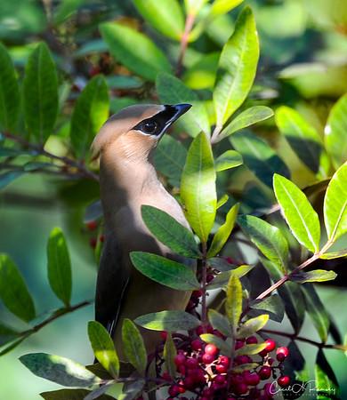Portfolio Images - Wildlife