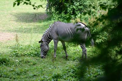 Bronx Zoo, 9-Jun-2018