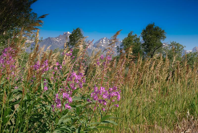 Grand Teton-011-3.jpg