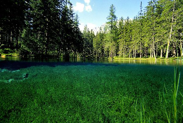 GrünerSee022.jpg