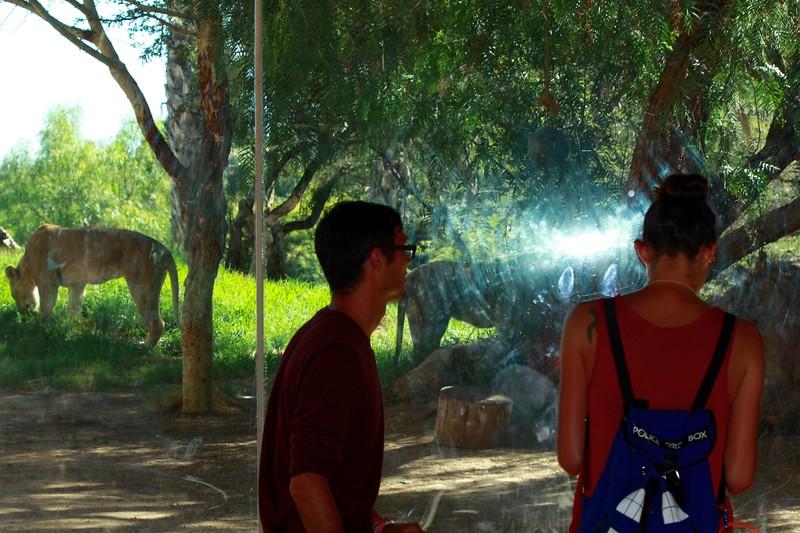 San Diego wild animal pakr 201700072.jpg