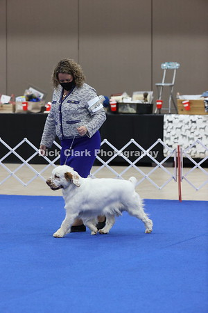 CSCA Regional Specialty Bitches 12-18 Months
