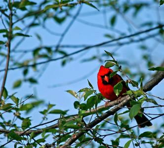 Backyard Birds and Animals