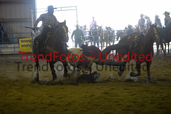 Barrhead Steer Wrestling Day 2