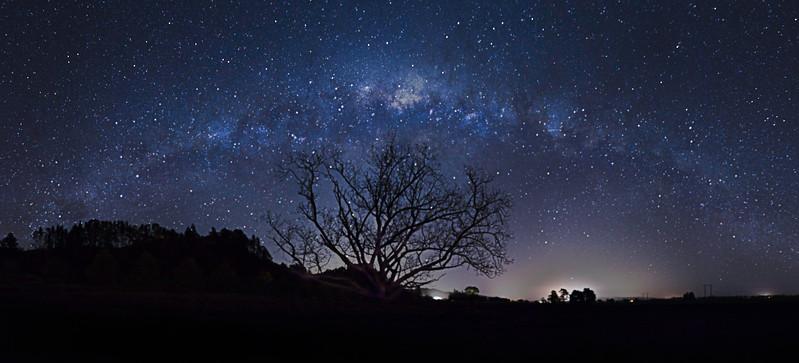 Ernest Tree Pano.jpg