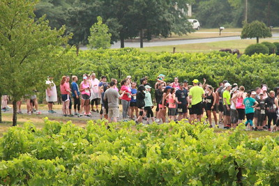 Run the Vineyards - Rock the Night Away
