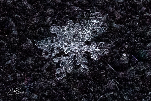 snowflakes-1453.jpg