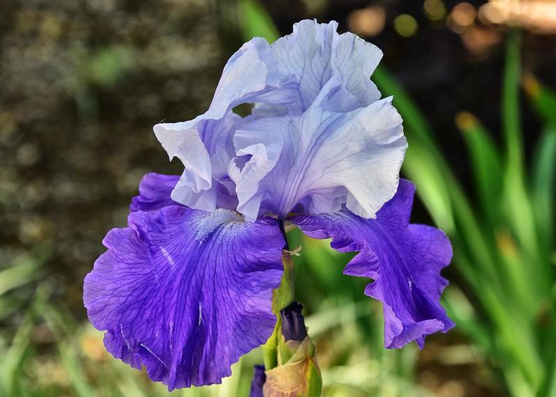 NEA_0740-7x5-Flower.jpg