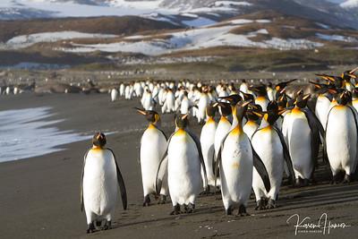 South Georgia and Falklands